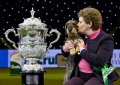 Crufts 2020, F-L-I-0-0-0-4, Dog, Dog Show, Pet, Kennel Club, Best in Show
